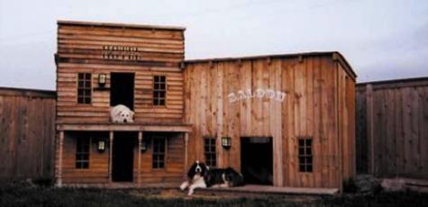 Western Cow-dog