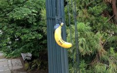 Bananas hanging from nooses