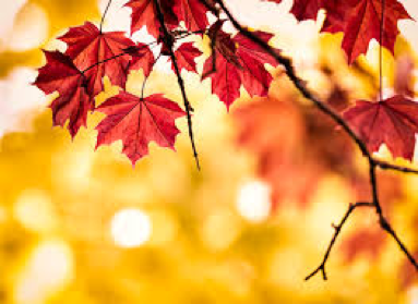 Best things to do in fall