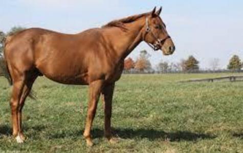 Horseback riding: Unappreciated pass time