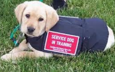 Service animals are pets!