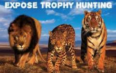 Murder is not a trophy