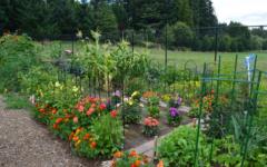 Lettuce enjoy the garden