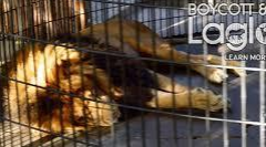 Boycott and protect Lagoon zoo animals