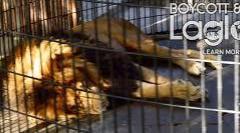 Boycott and protect Lagoon zoo animals