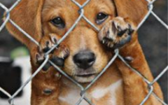 Utah's animal cruelty laws aren't effective