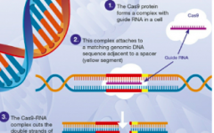 CRISPR: The way of the future
