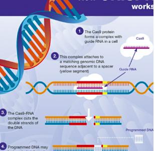 CRISPR: The way of the future
