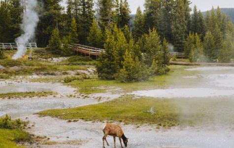 Teens Favorite National Parks