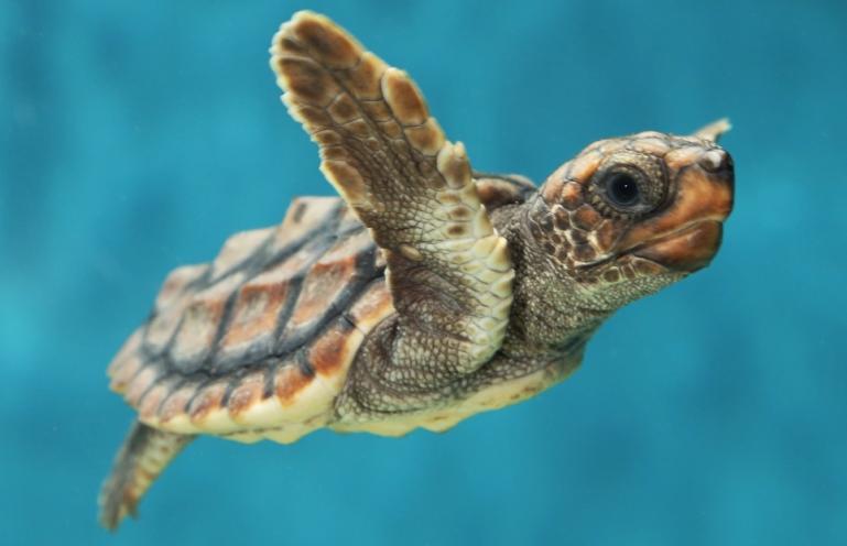 baby+sea+turtle